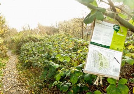 Bürgerbeteiligung zur Entwicklung der öffentlichen Grünfläche Hufewiesen, Dresden